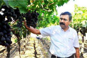 Rajaram Sangle, Director, Sangle Agro Processing Pvt. Ltd.